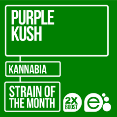 Purple Kush by Kannabia Seeds