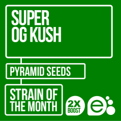 Super OG Kush by Pyramid Seeds
