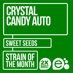 Crystal Candy Auto by Sweet Seeds